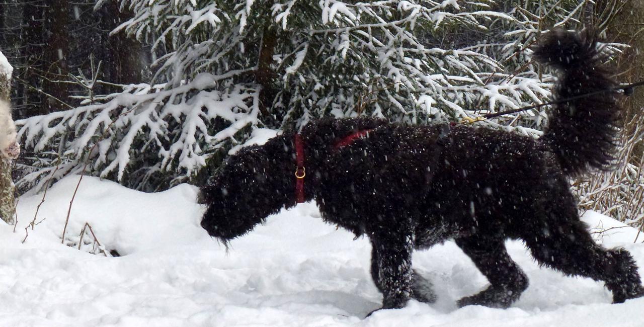 Dogtrekkingtour mit eigenem Hund in Clausthal