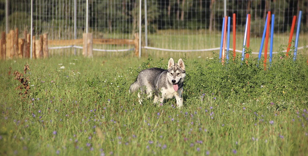 3,5 Std. Husky Wanderung in Dietfurt