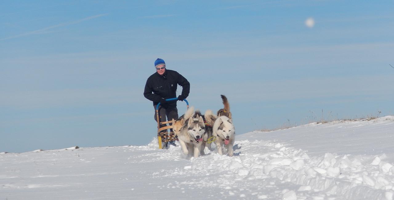 Schlittenhunde Schnuppertour Eiterfeld-Wölf