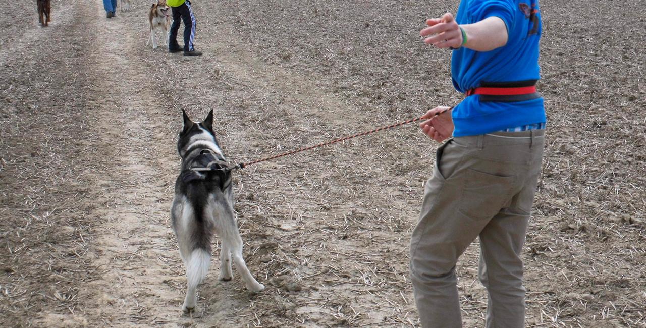 Husky Wanderung in Waldheim